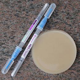 Test för båda synlig och dold mögel med Testset för mögel